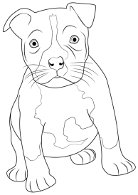 how-to-draw-Pitbull-Puppy-step-0